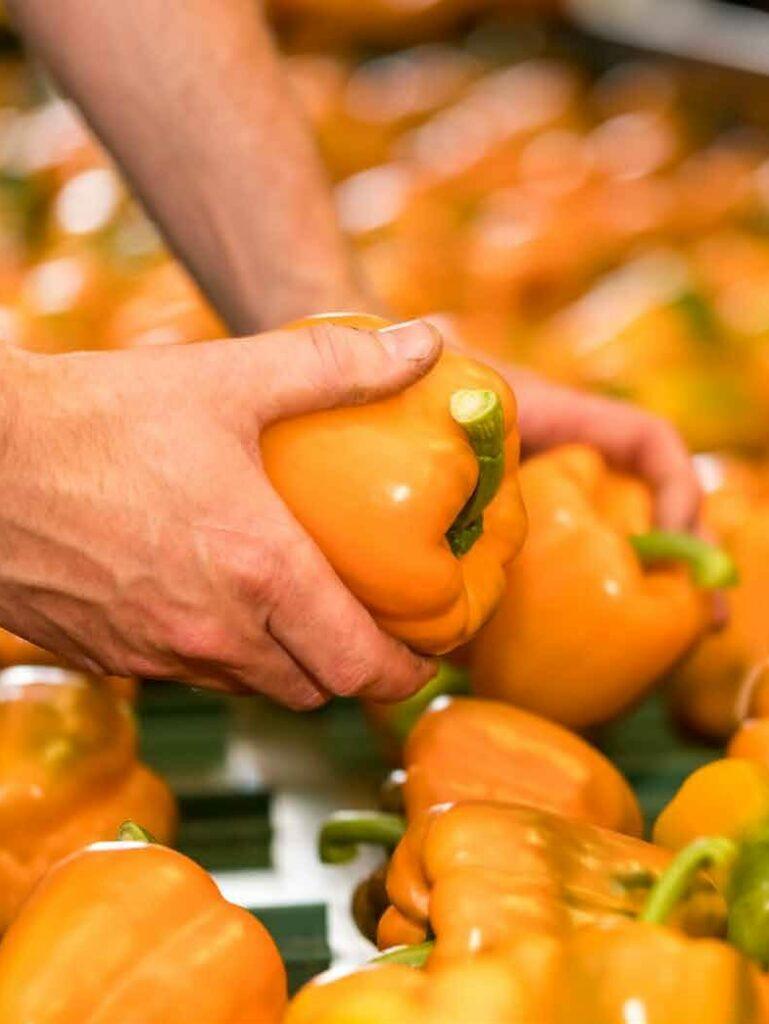 Copywriting: ZON fruit & vegetables